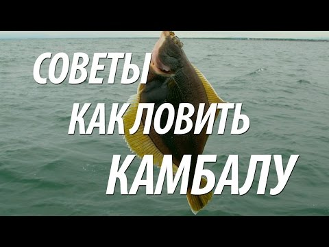 Морская рыба: полезные свойства популярных видов