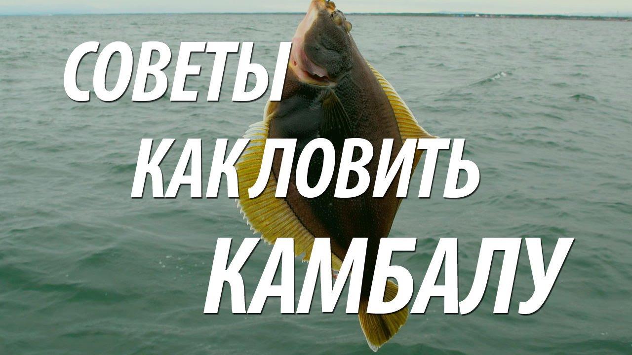 zivju paraziták