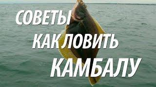 Рыба камбала ловля с берега. Морская рыбалка на камбалу(Рыба камбала желанный трофей для любителя рыбалки. Узнайте из видео, какие наживки применяют на камбалу,..., 2016-03-19T19:03:57.000Z)
