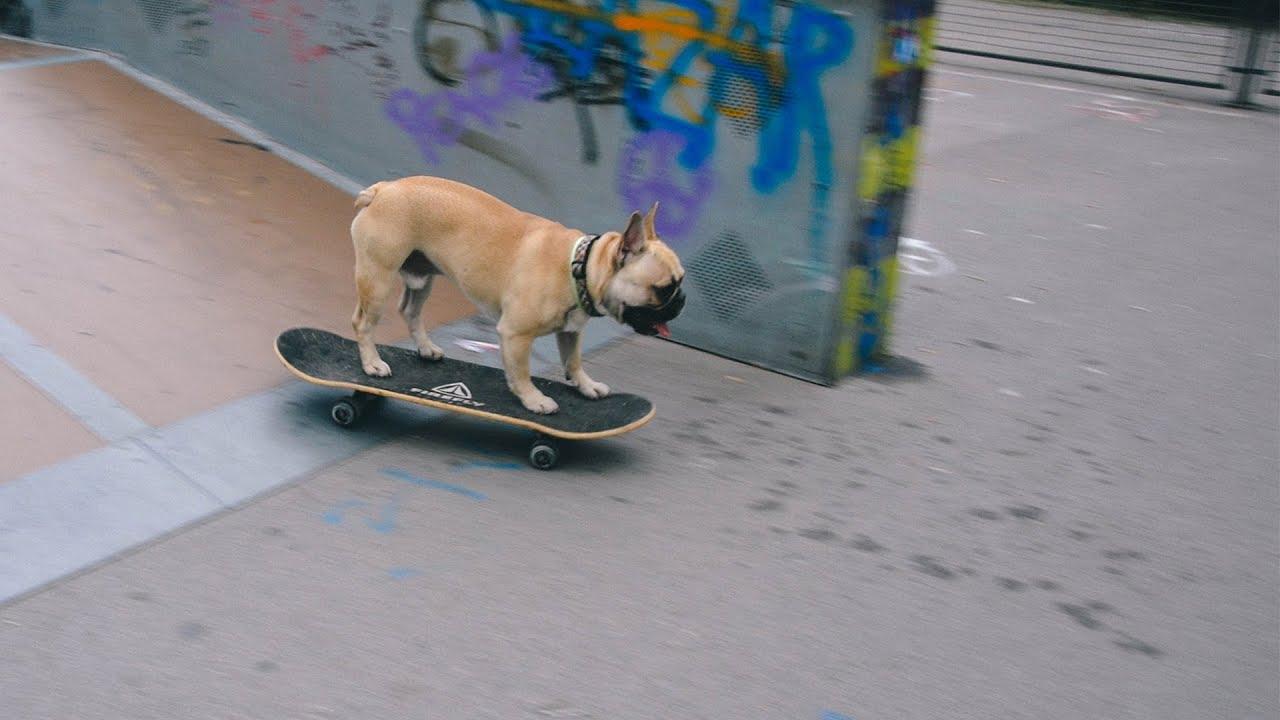 Roller skates for dogs - Roller Skates For Dogs 28