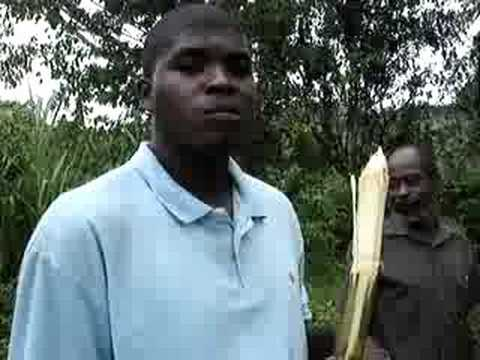 How to eat sugar cane - YouTube