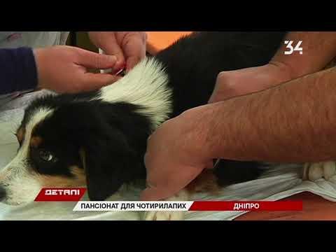 """34 телеканал: Превратить КП """"Зооконтроль"""" в Днепре в суперцентр для животных планируют до 1 декабря"""