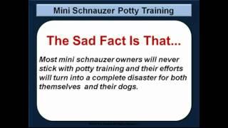 mini schnauzer potty training