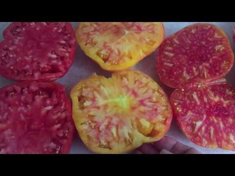 Томаты: «Сахарный гигант», «Грейпфрут», и Afternoon delight (Послеобеденный восторг»)