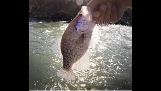 """A """"Crappie"""" Fishing Day at Rye Patch, Nevada"""