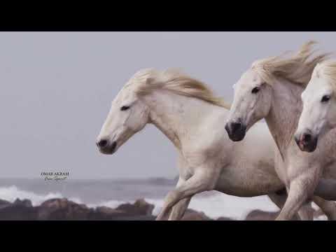 Free Spirit - OMAR AKRAM