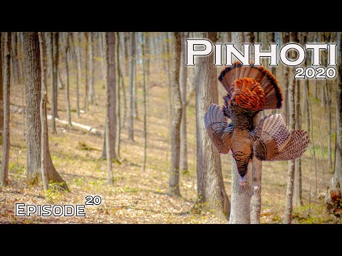PERFECT HARDWOODS TURKEY HUNT | PUBLIC HUNTING In INDIANA | OPENING DAY GOBBLER- Pinhoti 2020