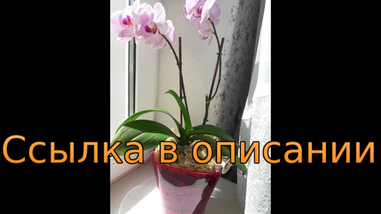 Как пересаживать цветущую орхидею в домашних условиях 894
