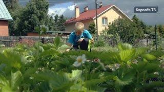 Подростки в Королёве проводят лето в теплицах(, 2015-06-24T16:49:48.000Z)