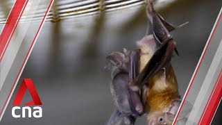 Studies point to bats as likely hosts of novel coronavirus: Experts
