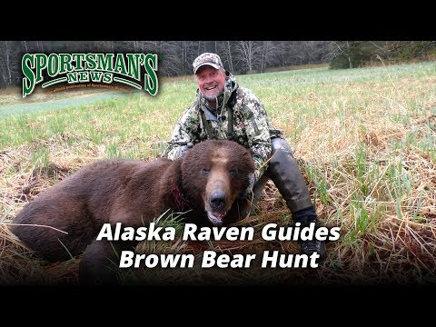 alaska-raven-guides-brown-bear-hunt