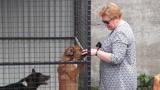 Приют для собак в Рязани.РВ ТВ