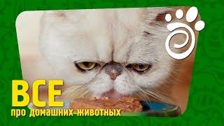 Немного О Правильной Кошачьей Еде. Все О Домашних Животных
