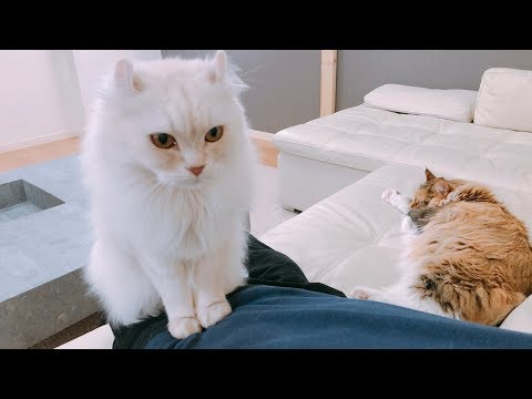 【LIVE】 How many cats can the owner take?
