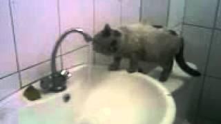 Видео000.3gpхалява кошка бтса бийск