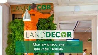 Монтаж фитостены от LAND DECOR для кафе
