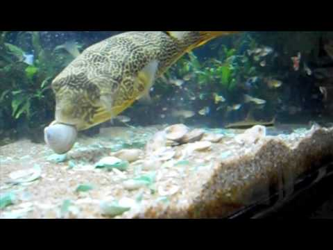 Awesome Day At Aquarium Co Op Youtube