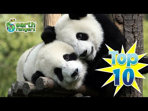 Top 10: Animals in Love