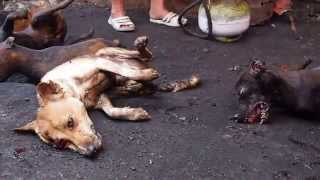 Say No To Dog Meat! (Indonesia, Sulawesi, Tomohon)