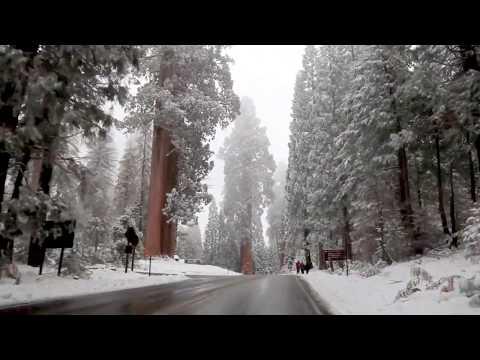 Sequoia National Park 01.20.2018