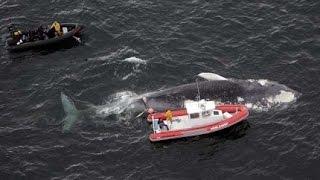 Большой Синий Кит !!! Невероятный Гигант Океана ! Животные с National Geographic