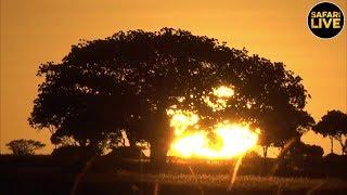 safariLIVE- Sunrise Safari - February 14, 2019 thumbnail