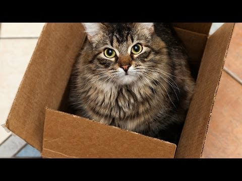 How to Cat-Proof Your Home & Yard | Cat Care