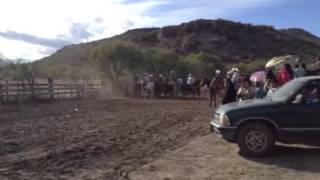 Coleadera Rodeo,Durango
