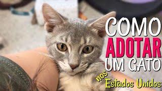 Como adotar um gato nos Estados Unidos / Josi Daresbach / Vlog 18