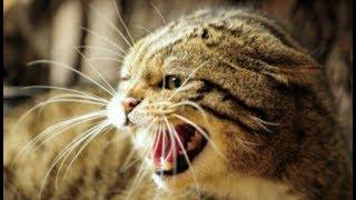Роковая ошибка, которую совершают владельцы кошек