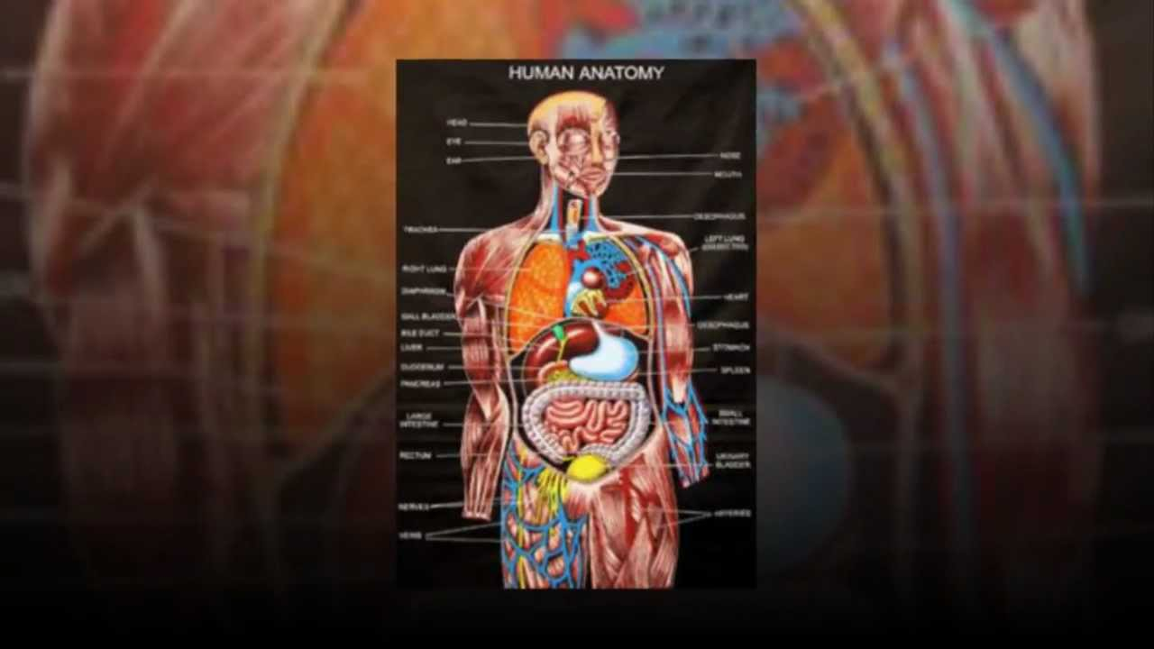 Essentials Of Human Anatomy Physiology Youtube