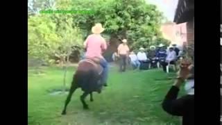 8/21/2014  1:09 PM caballo michoacano bailando el tamarindo