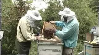 Repeat youtube video Осінь...Бджоли готуються до зими