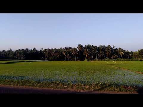 Beautiful Paddy land with natural beauty scene