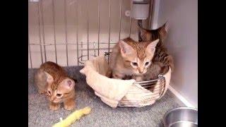 販売状況は公式ブログ ↓ http://blogs.yahoo.co.jp/xll_dog_and_cat_llx...