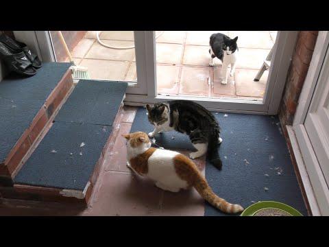 Craziest Cat Fight | 4K | Original