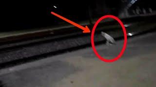 Supar Fast Train Vs Dog    Poorva Express At 110+ At Night