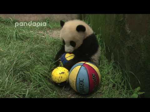 panda furs balls