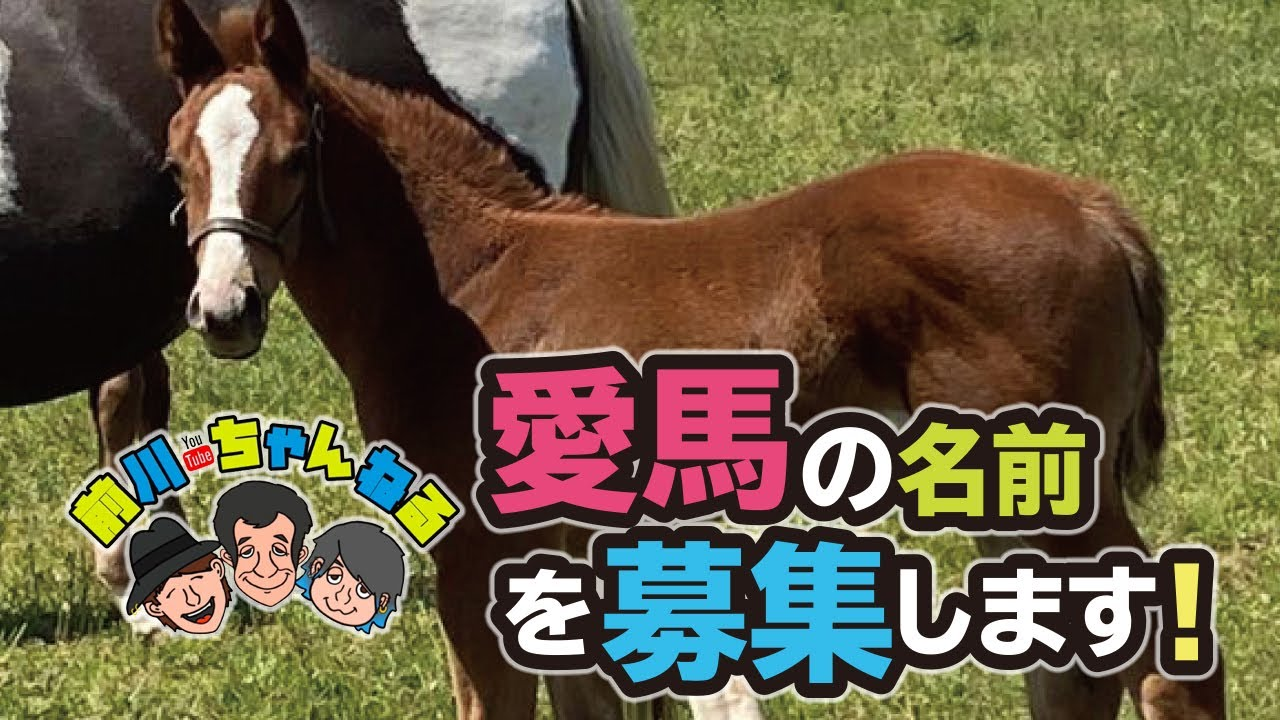 愛馬の名前を募集します!!
