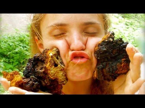 Чага (берёзовый гриб) - Полезные свойства и применение