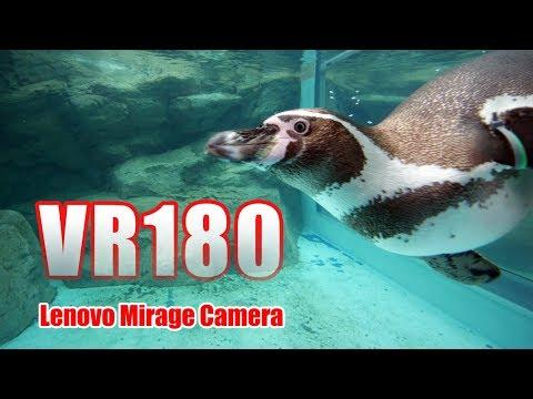 [VR180] アクアワールド茨城県大洗水族館 VR [Lenovo Mirage Solo Camera]