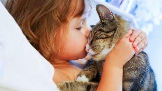 Кошки не любят когда их целуют   лучшее за весь 2015 год * Katter liker ikke når de kysser   det bes