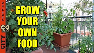How To Grow Vegetables In An Apartment