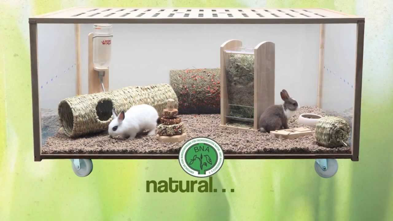 Living World Green Pequenos Animales Youtube