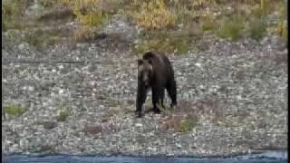Bear hunting hunters.