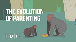 The Evolution Of Parenting | Goats & Soda | NPR