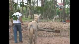 Feliciano Filho resgata uma mula com a pata machucada