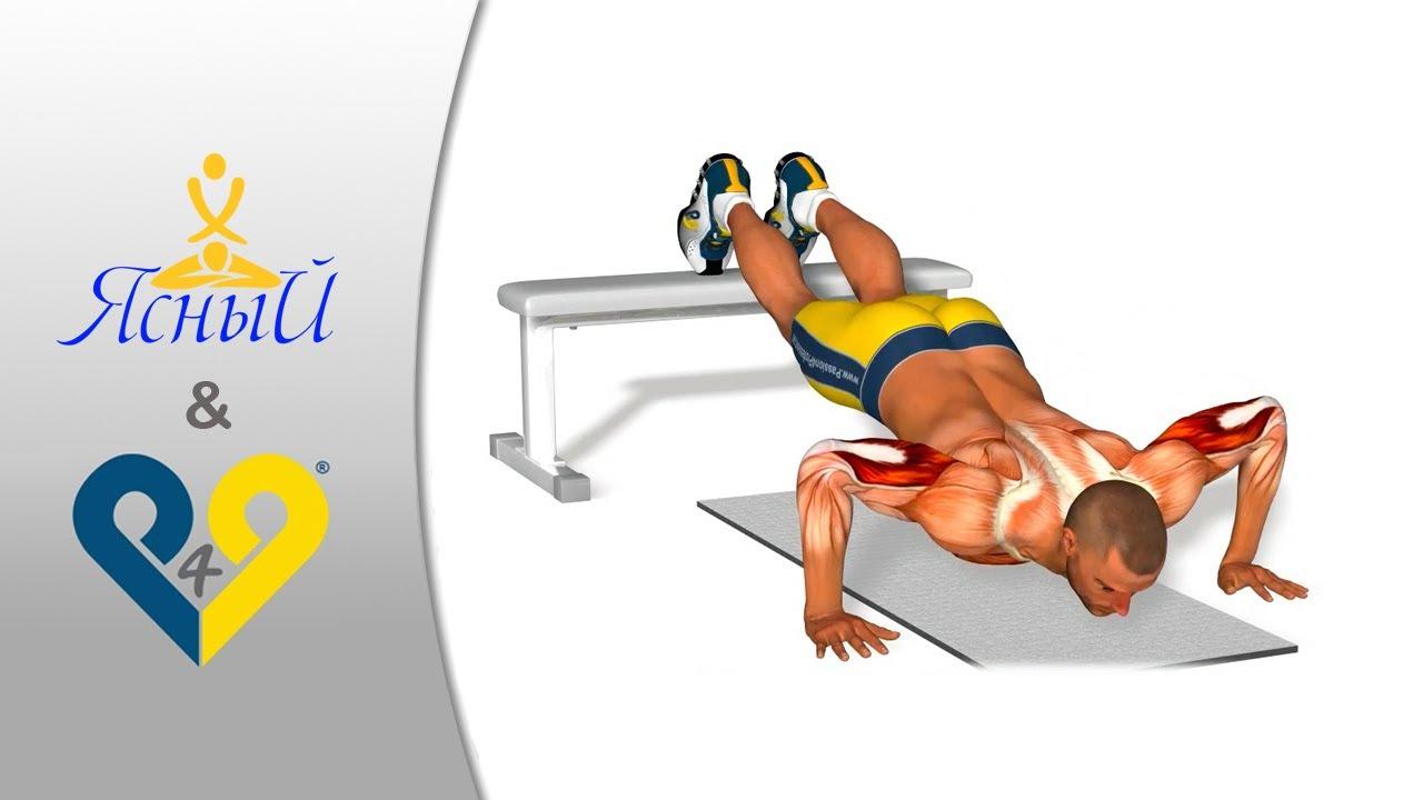 Упражнение Отжимания от скамьи - Fitmus