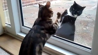 Кошка просится к жениху