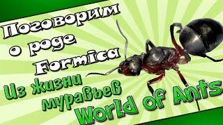 Жизнь и поведение муравьев рода Formica